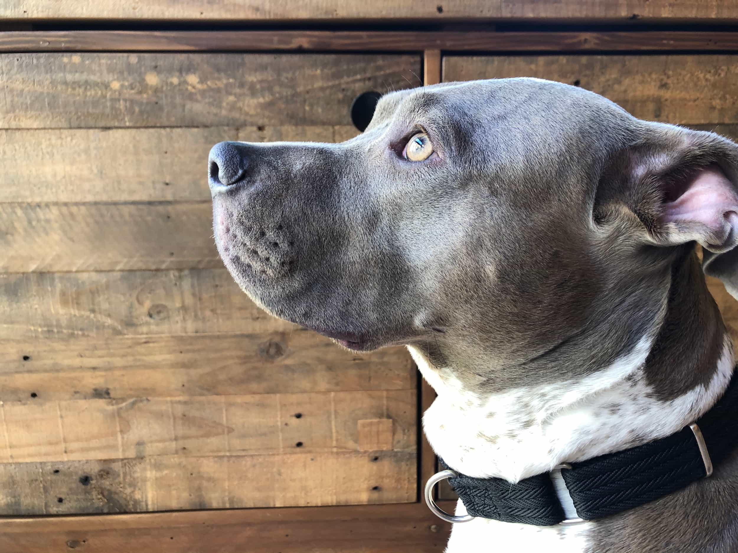 Pibbles CBD 100 Percent Donated To Rescues