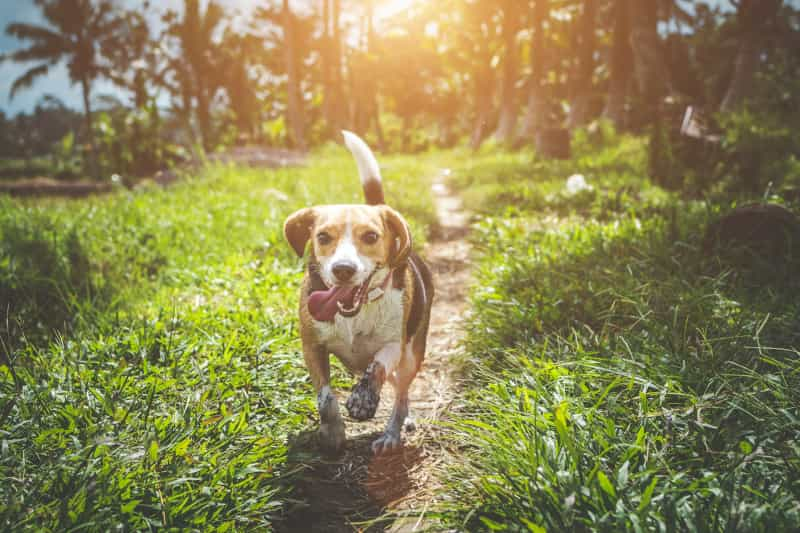 How To Choose CBD Oil For Your Dog